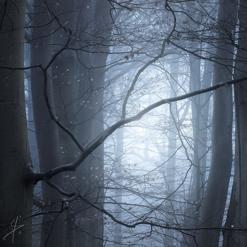 Runetree.jpg