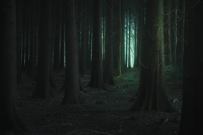 Where the Forest Knows your Name.jpg