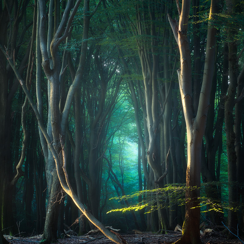 The Waking Forest-Edit.jpg