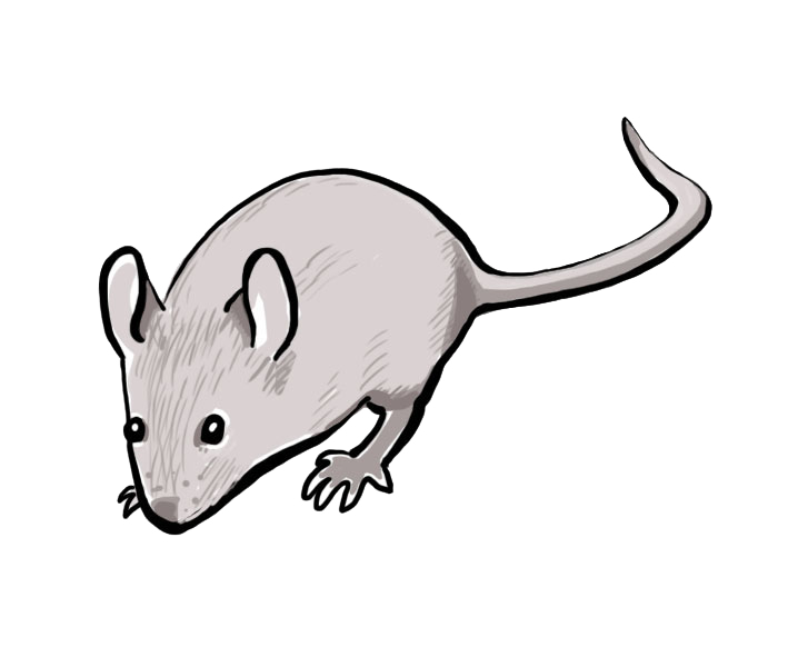 Mouse_illustration.png
