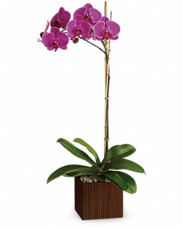 Orchid 1 - $65.00