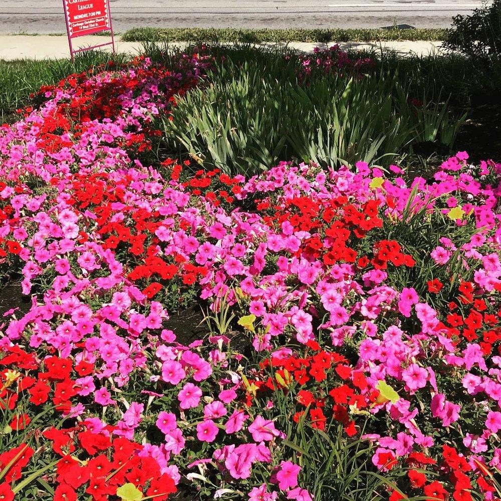 flower bed 2.jpg