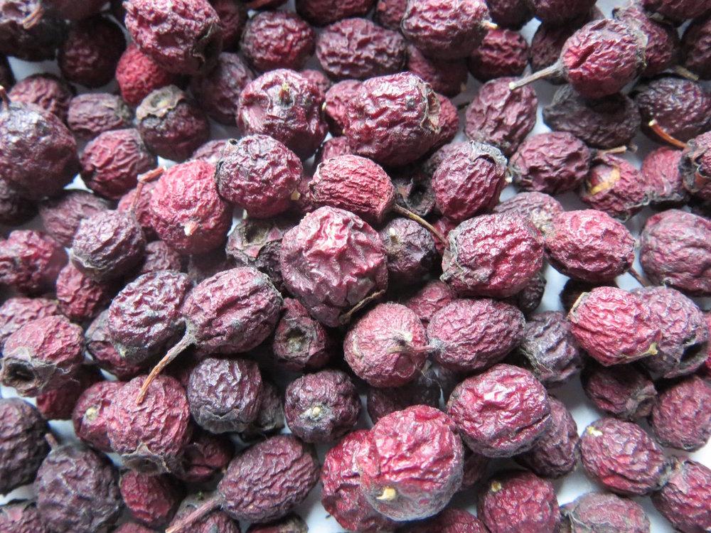 hawthorn berries 2.jpg