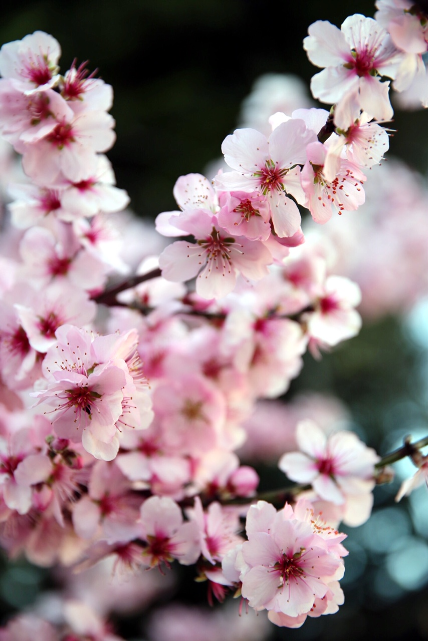 Blossom : All Sorts Of Lovely