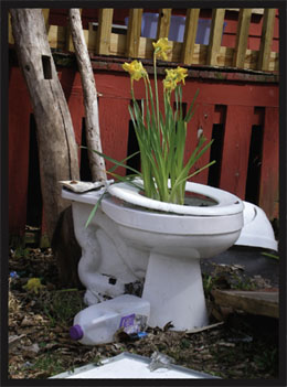 flowers in a toilet