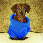 dog in a snuggie