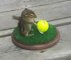 chipmunk-golf-sm