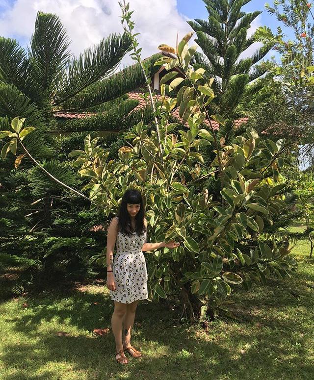 Emma and a HUGE  Ficus elastica  in Thailand