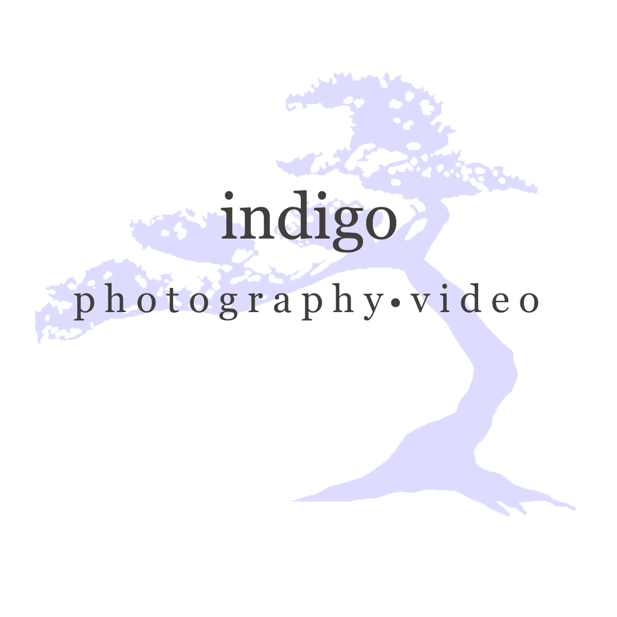 Charlotte, NC Wedding Photography & Videography | Indigo
