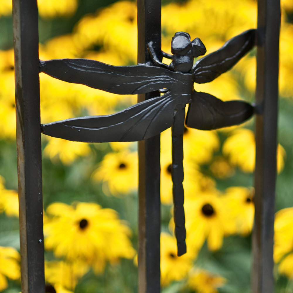 INSECT FENCE (DRAGONFLY) - Satellite Café, 50th & Baltimore Ave. Philadelphia, PA