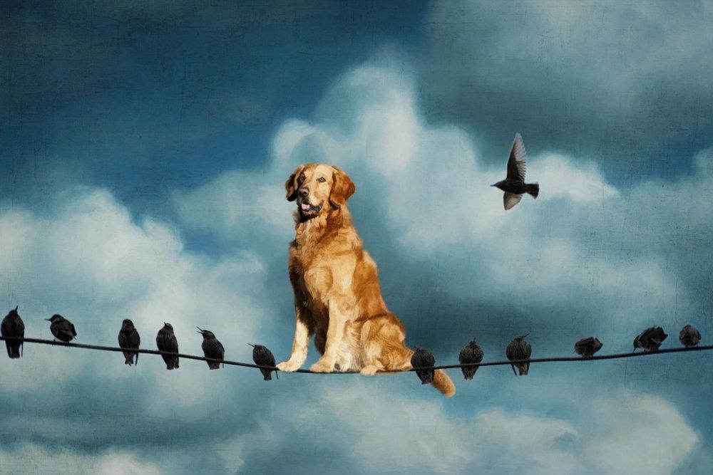 Bird Dog. Birds on a Wire.