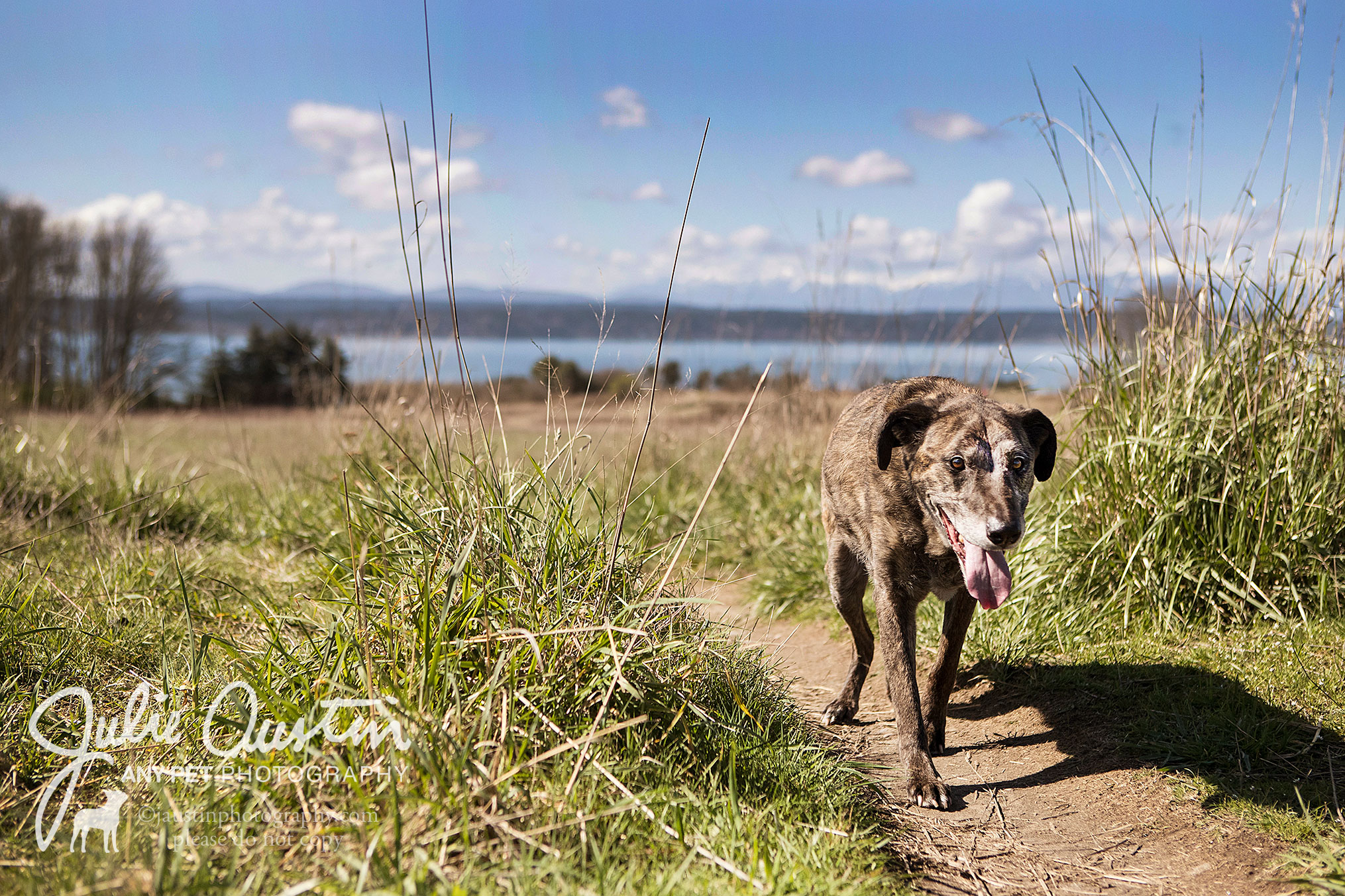 Dakota enjoys a mellow stroll at Discovery Park.
