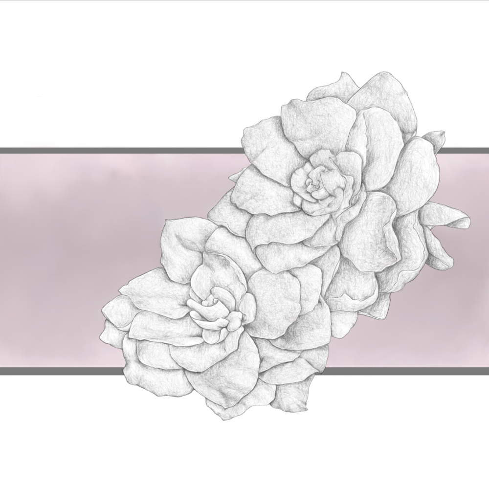 2019.02.15 flowers 72small.png