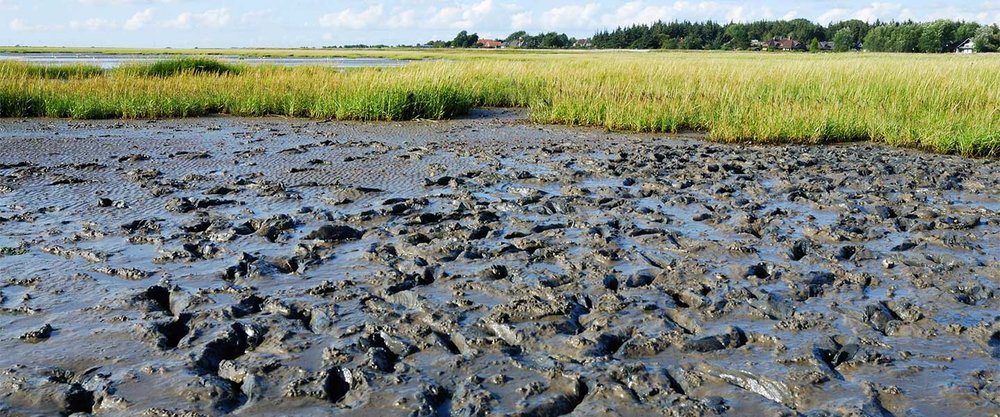 Tidal Marshes - Tidal marshes are being lost at a rate of 1-2% per year. They cover roughly 140 million hectares of Earth's surface. They have lost more than 50% of their historical global coverage.