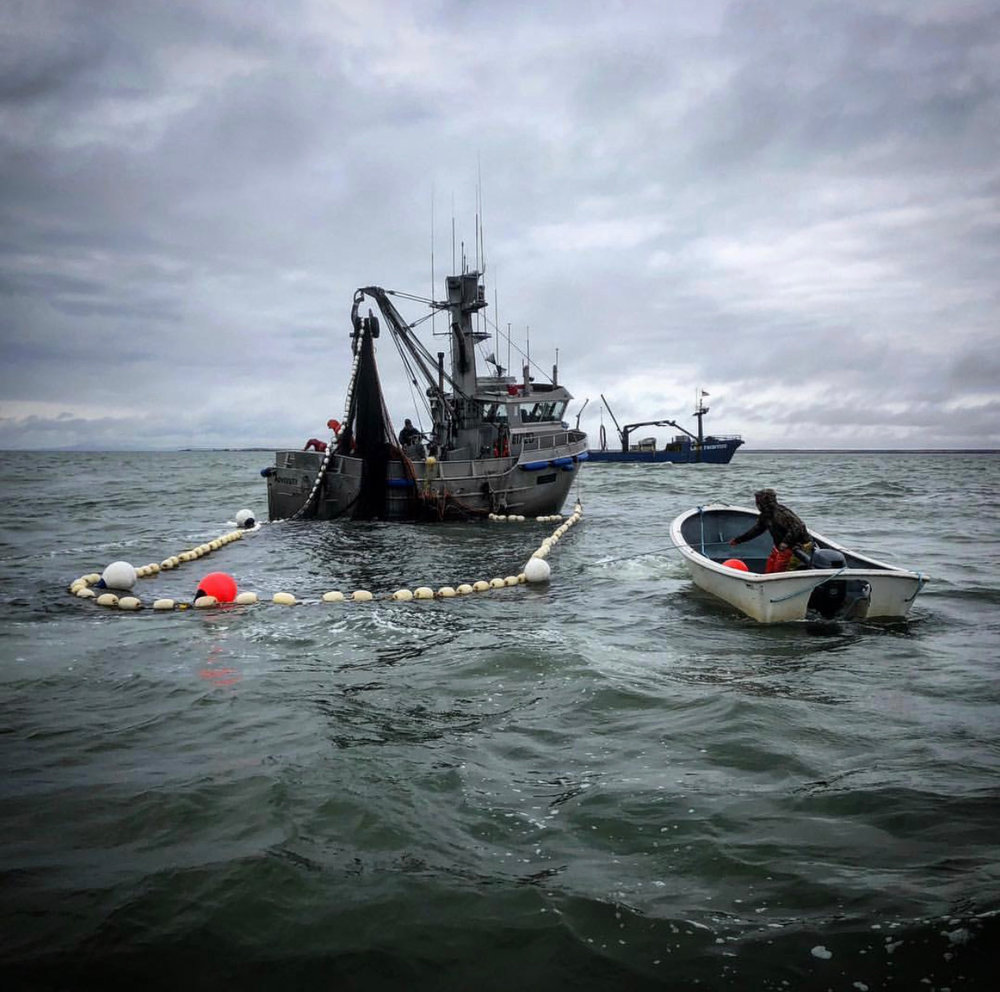 Seining for herring in Togiak, Bristol Bay, Alaska. Photo by Blake Benson.