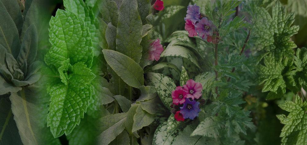 Why Smoke Herbs? -