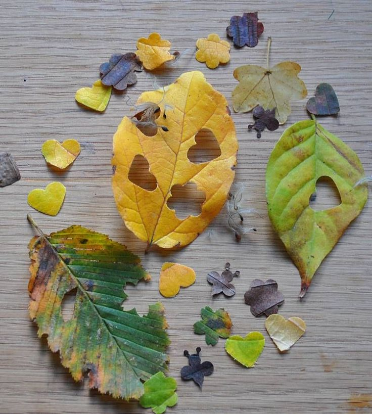 Planning for a Fall Wedding_ Check out this great, biodegradable confetti idea!.jpeg