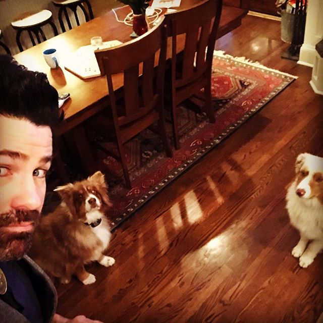 Sup Dog #aussies #echo #avery