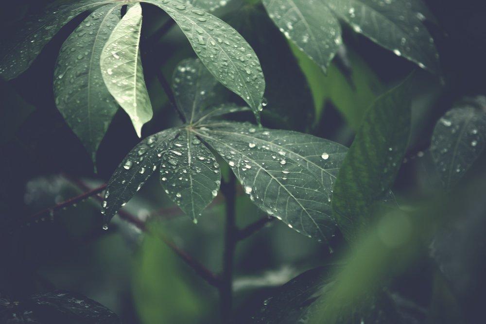 blur-close-up-dew-303024.jpg