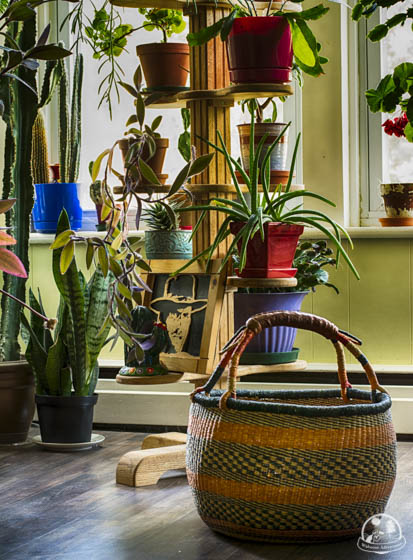I. love. plants. Especially cacti and succulents. -