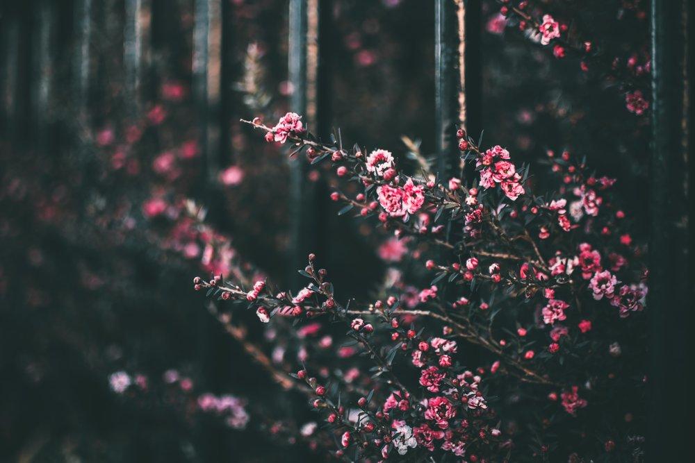 blooming-blossom-blurred-background-1182338.jpg