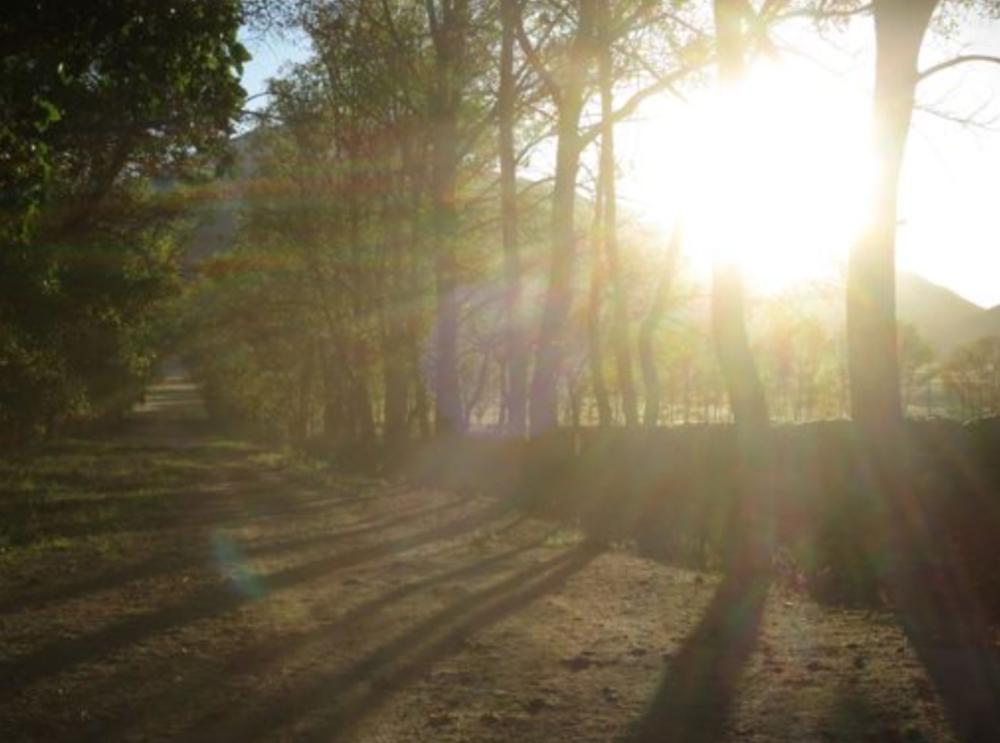 The sun strikes through the corta in the morning.