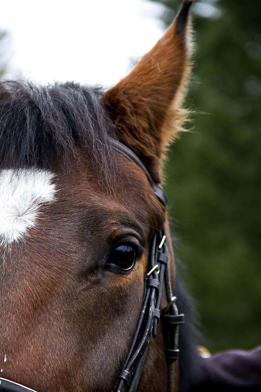 Josephine+horse+eye.jpg