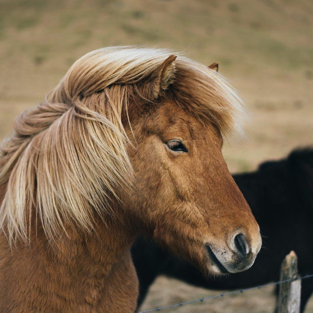 MINI+HORSE.jpg