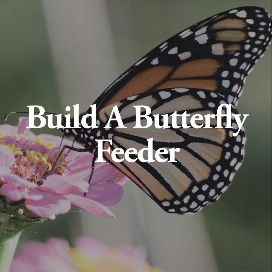 LineUp Images_Build a Butterfly Feeder.jpg