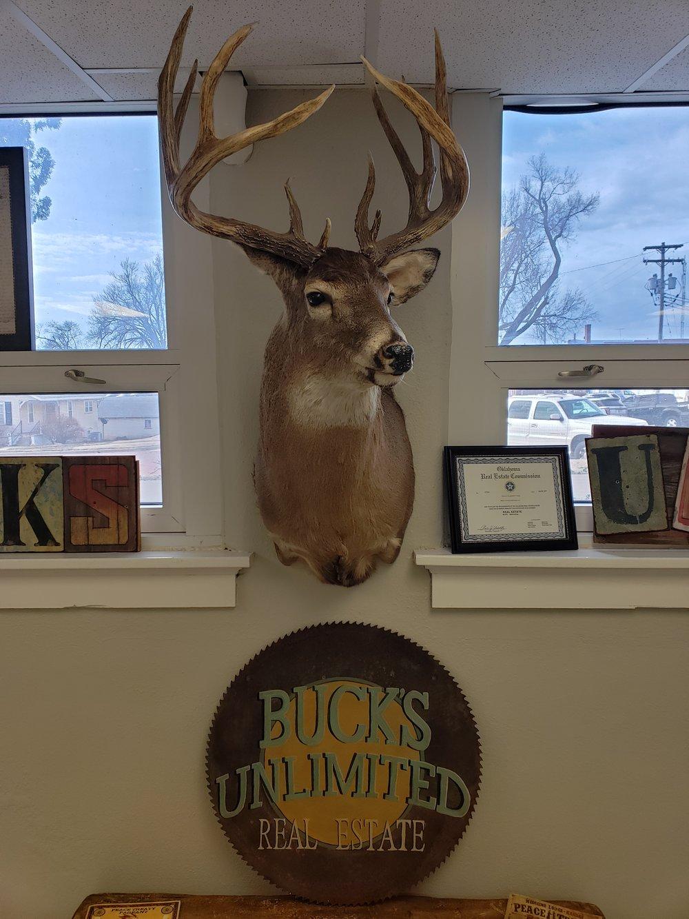 bucks-unlimited-deer-mount.jpg