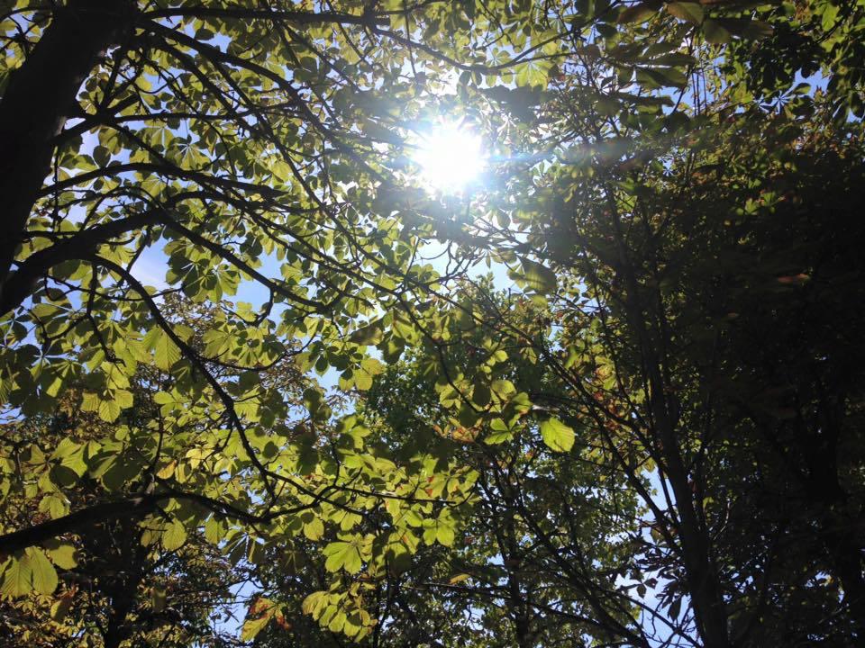 sunny day paris
