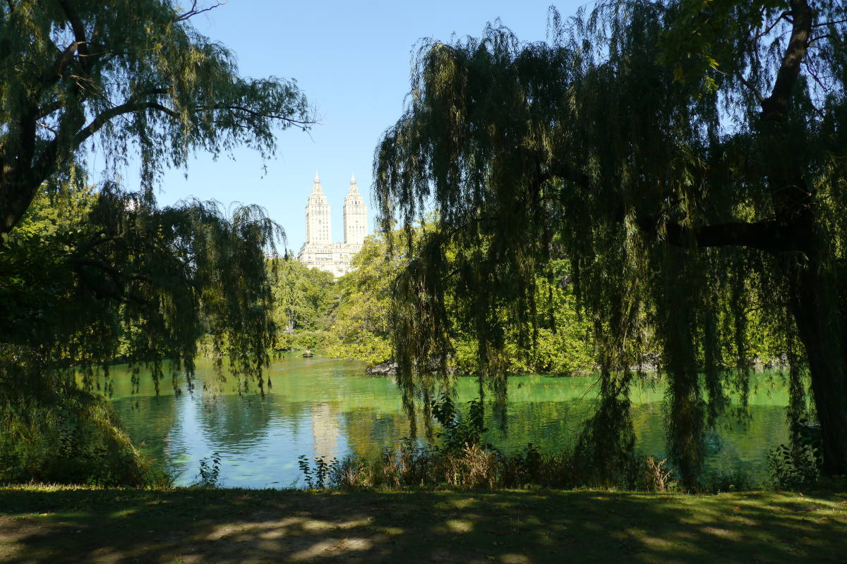 new york in the summer central park