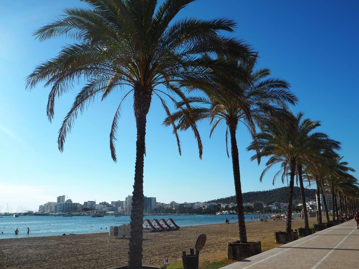 palm trees on the beach in san antonio ibiza