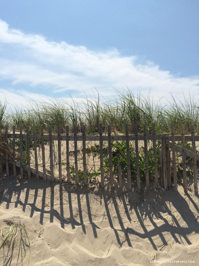storm fencing, nauset beach / elizabethcraneswartz.com