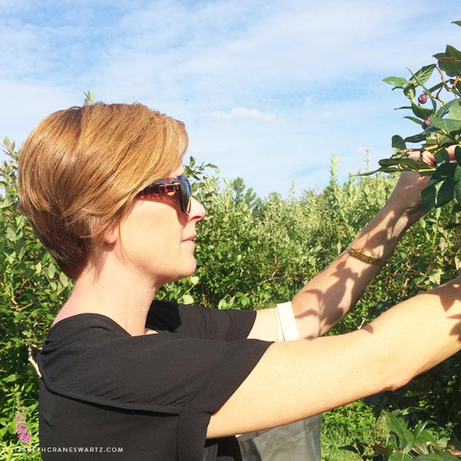 blueberry picking / elizabethcraneswartz.com