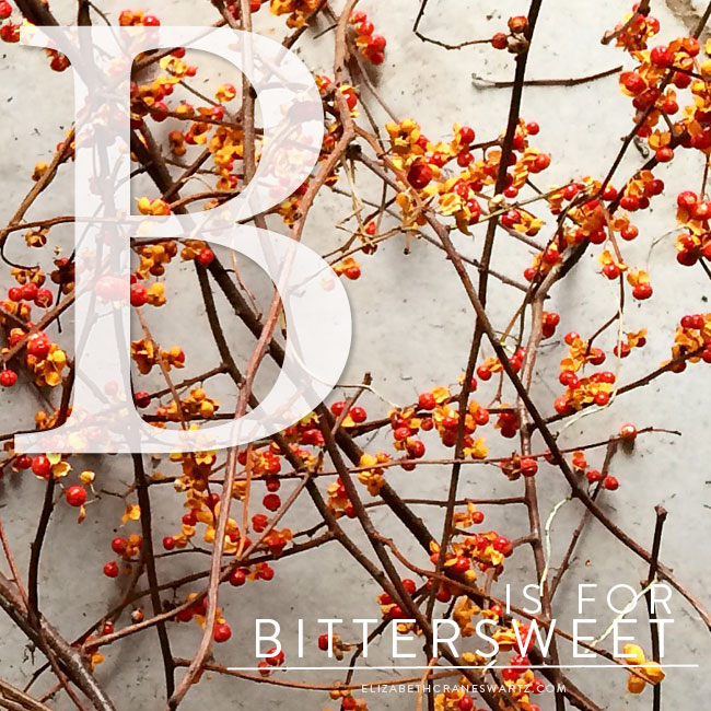 B is for bittersweet / elizabethcraneswartz.com