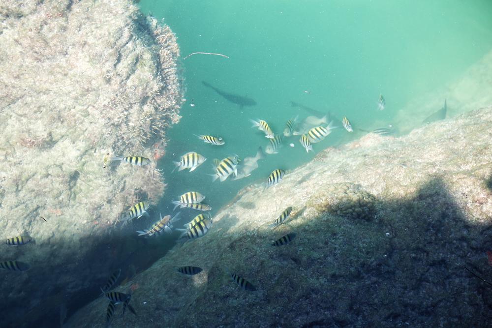 KB-pier-fish