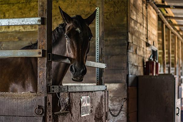 HorseRojasEquine_0006_animal-barn-building-357321.jpg