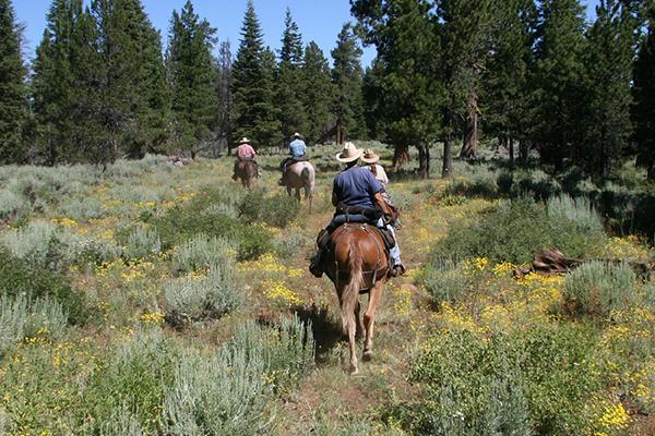 HorseRojasEquine_0002_horseback-riding-1393029_1280.jpg