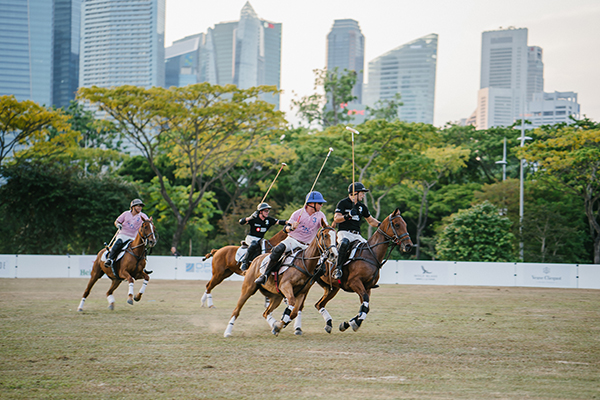 HorseRojasEquine_0003_action-energy-adult-athlete-1941888.jpg