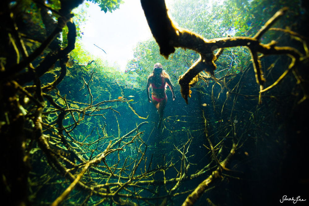 We hiked over an hour to get to this location. Outex was in my backpack before we jumped in. Mangroves growing into a cenote in Mexico.