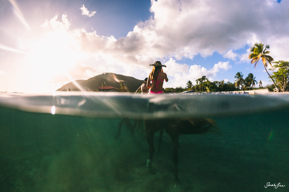 Swimming with Horses in Dominica
