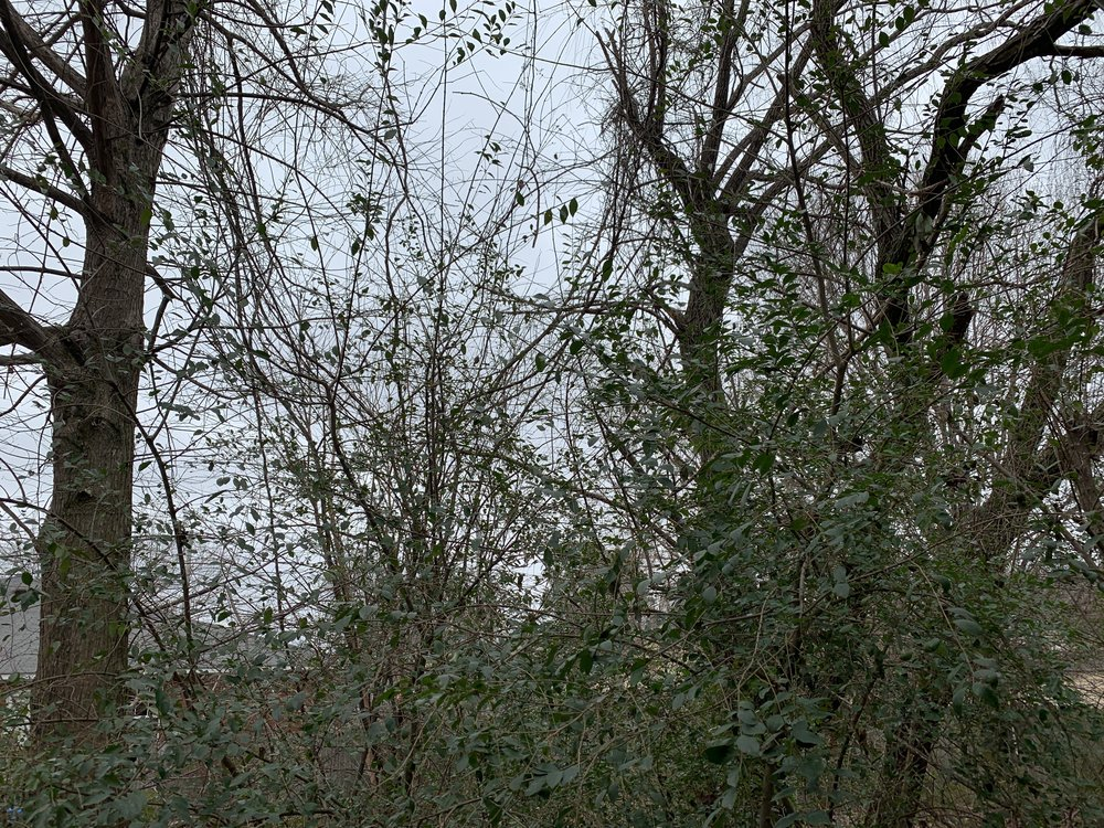 The sky is grey and the trees are bare, Soon you will be photo-worthy after your long winters nap.