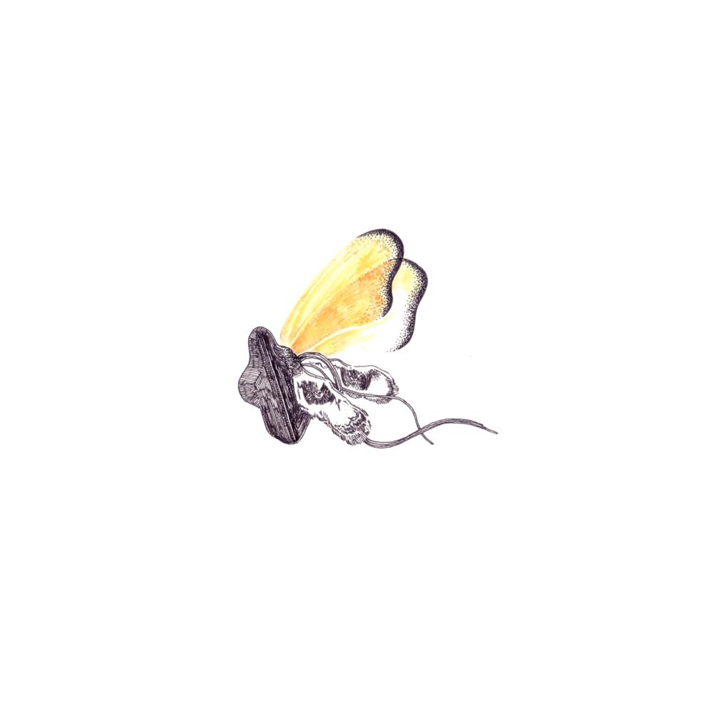 sun still shines  /  Single  / June 2, 2018