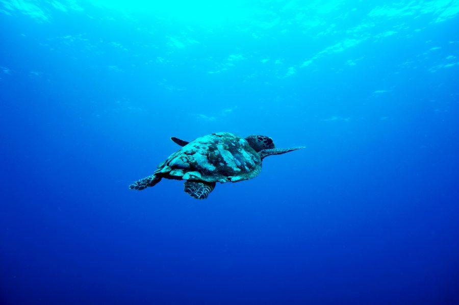 turtle-bitcoin.jpg