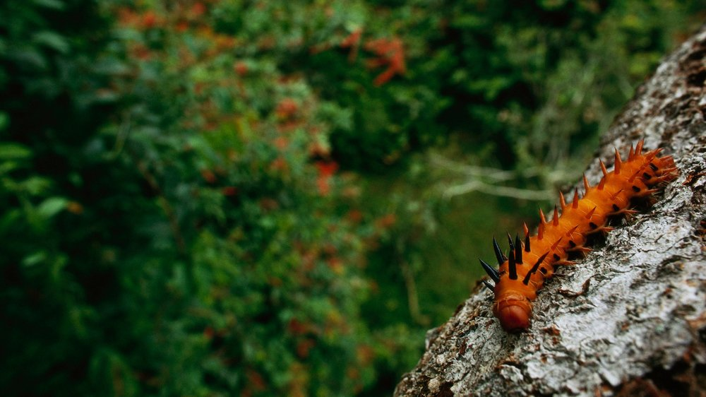 About the Convention on Biological Diversity - learn more about how we got here and what the next steps are on the path to protecting 30 percent of the planet by 2030