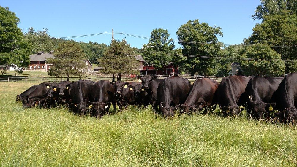 Corné Vogelaar - grazing farm background 2.jpg