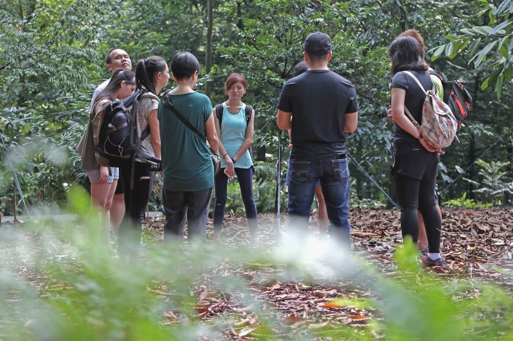 projects | forest bathing, nature therapy, yoga nidra, rest, for team building, wellness, staff wellbeing, retreats