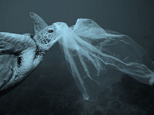 The spiraling effects of the plastic bag on our marine environment