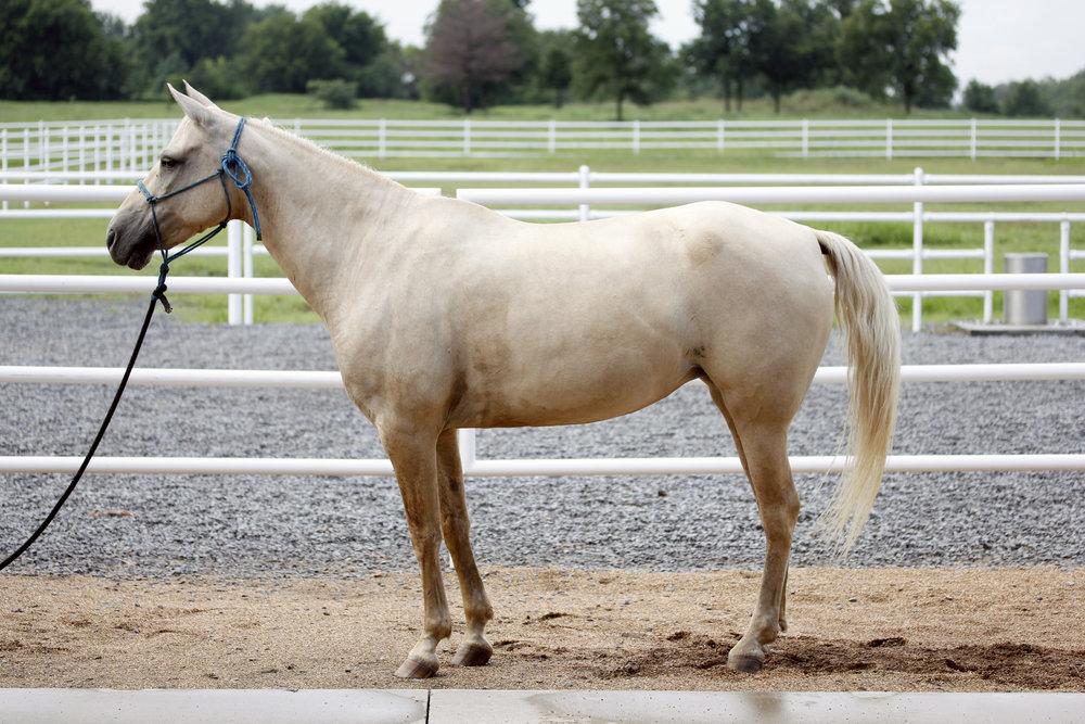 HorseCarmella2.JPG